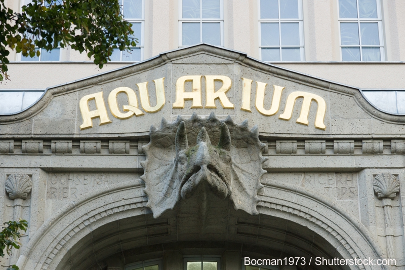 Aquarium in Berlin