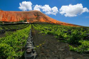 Lanzarote Wein