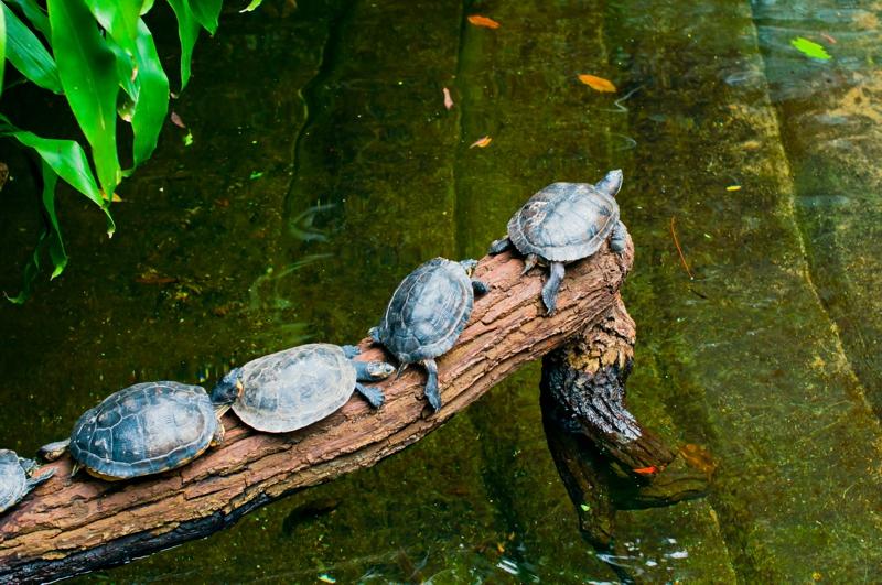 Wasserschildkröten, Aquarium in Berlin