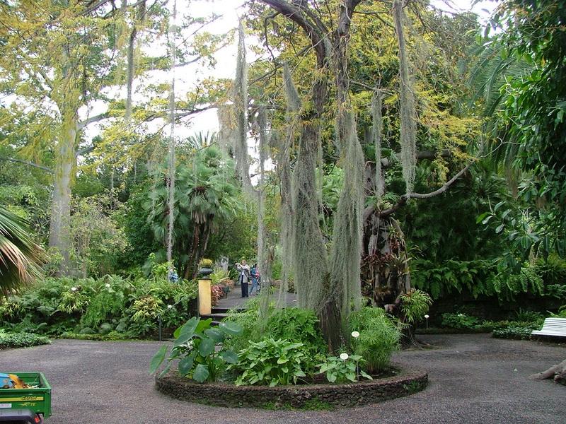 Jardín Botánico de la Orotava