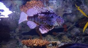 Regen in Lissabon - Besuch im Aquarium