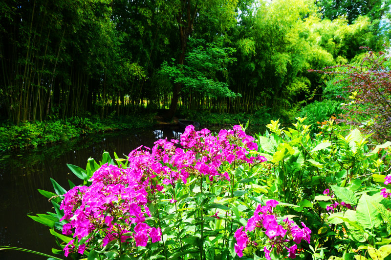 Monet Garten Blumen