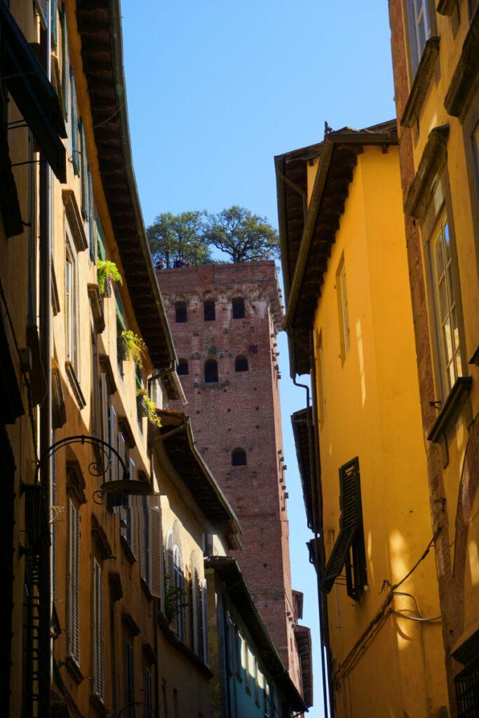 Torre Guinigi in Lucca