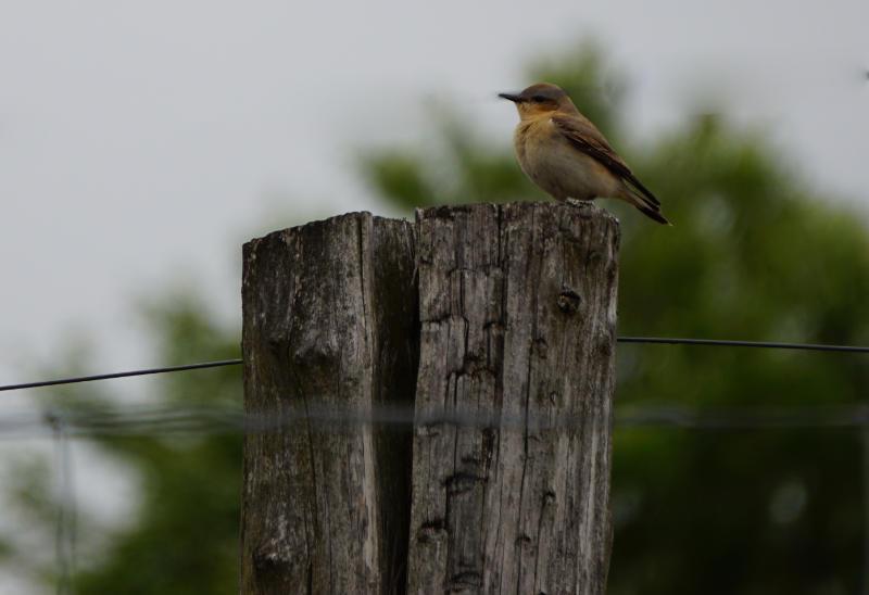Vogel in der Döberitzer Heide
