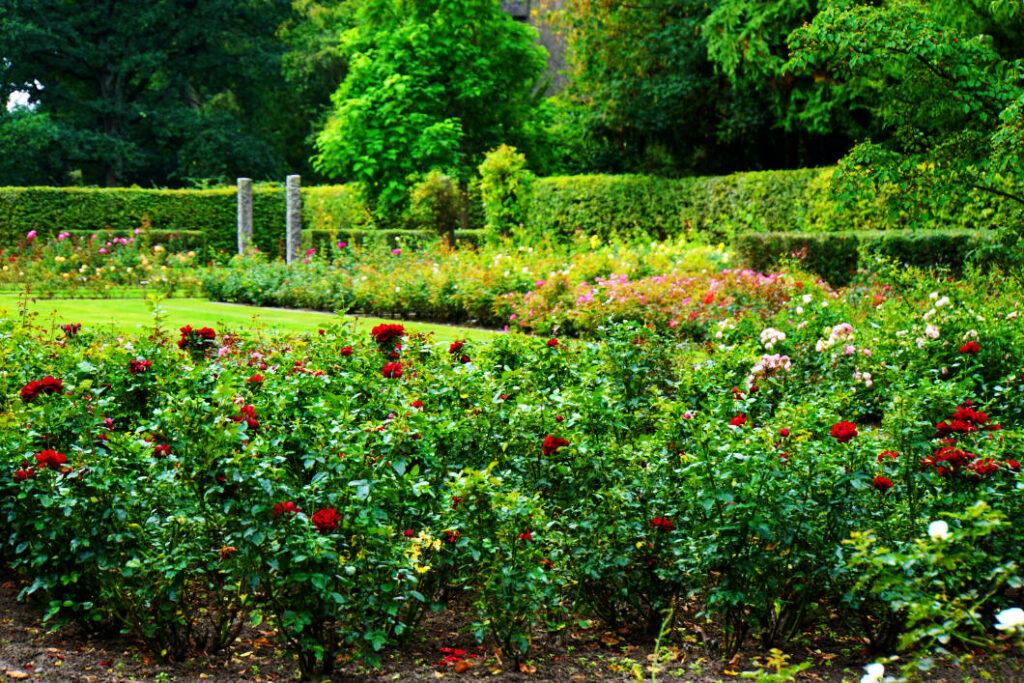 Rosengarten im Gesundheitspark