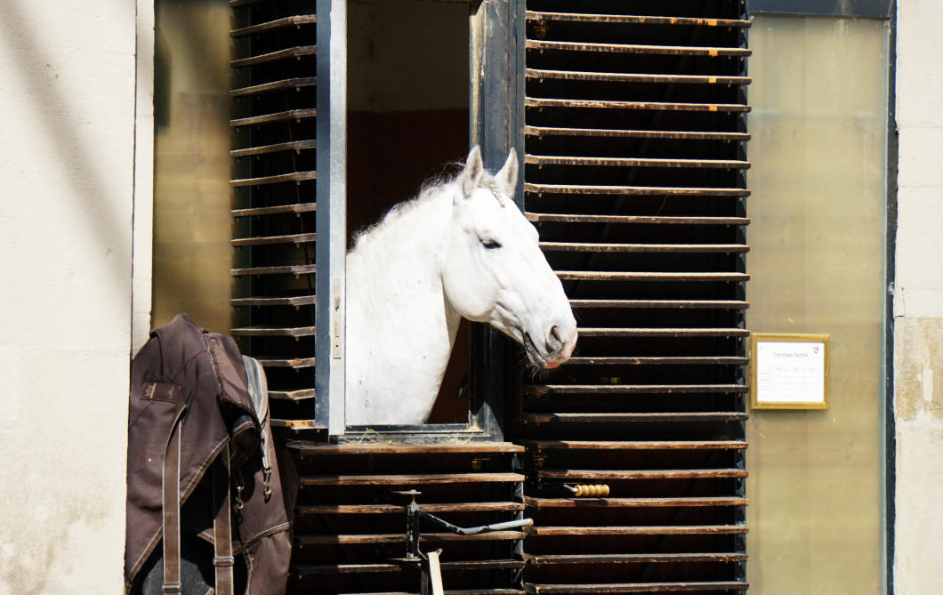 Außenbox mit Pferd