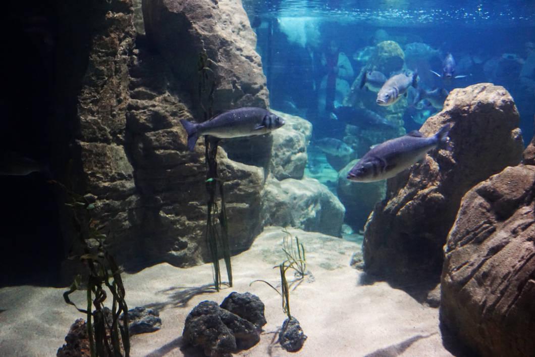 Fische im Malta National Aquarium