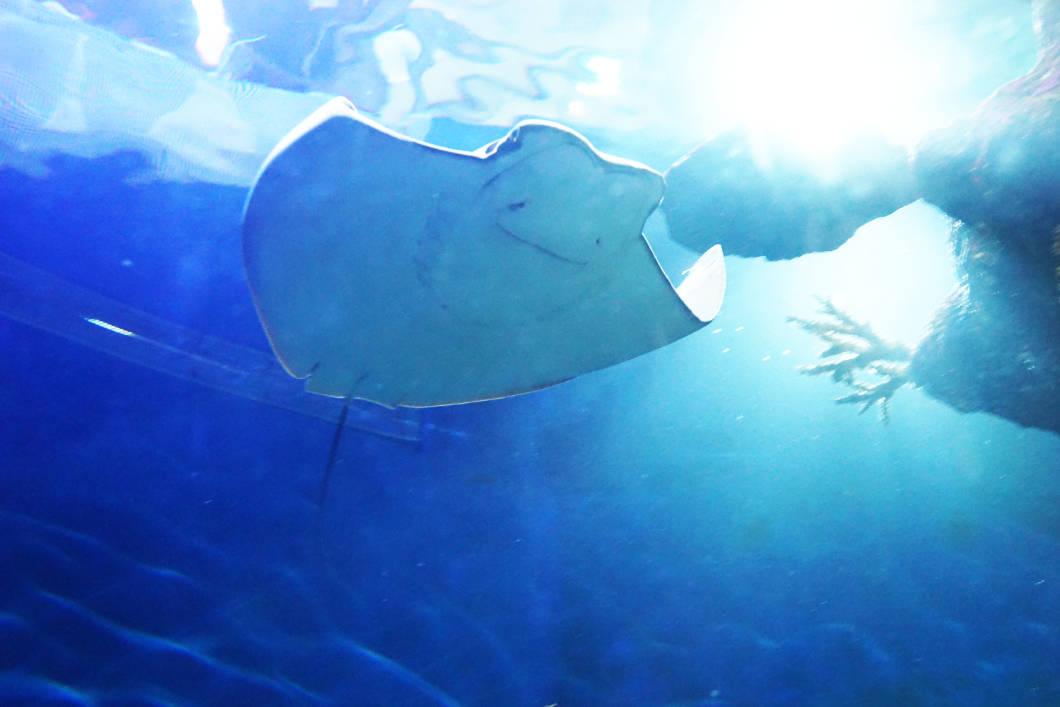 Malta National Aquarium: Rochen