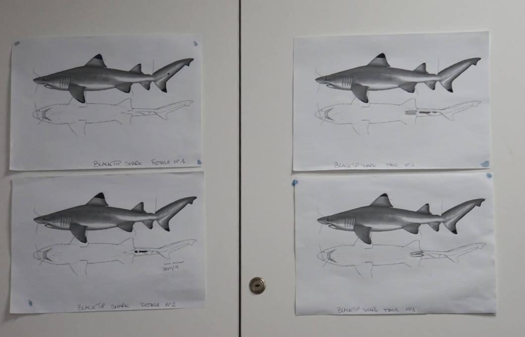 Malta National Aquarium - welcher Hai ist es