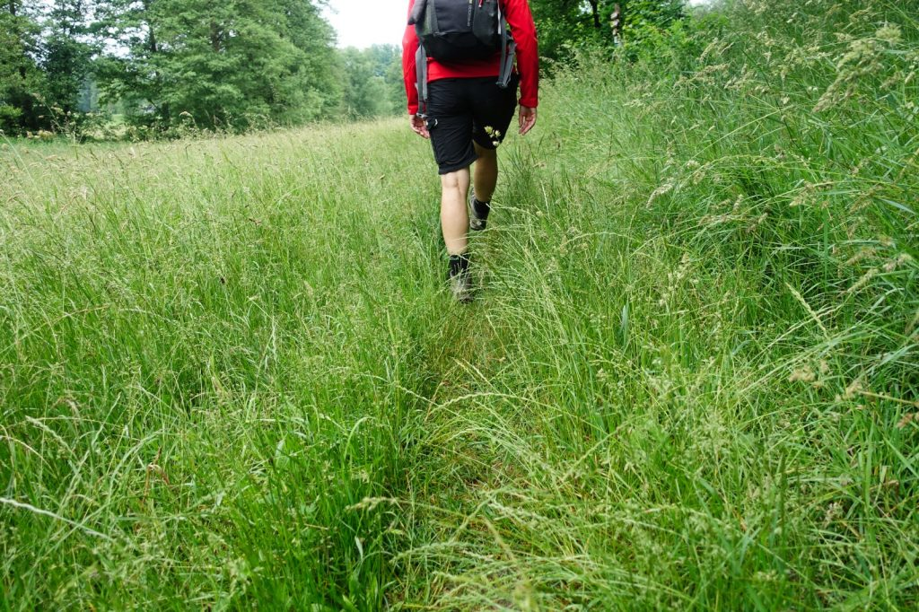 Wanderung Waldgesundheitstraining