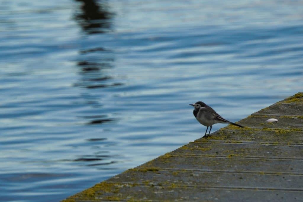 Vogel auf dem Steg - Ausflugstipps in Vorpommern