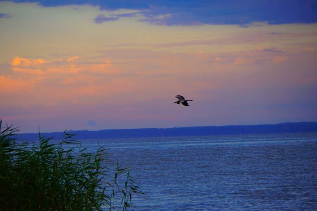 Vogel über dem Stettiner Haff - Ausflugstipps in Vorpommern
