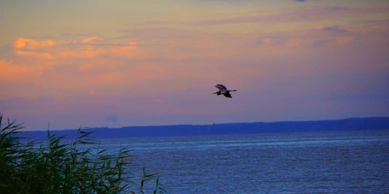 Vogel über dem Stettiner Haff