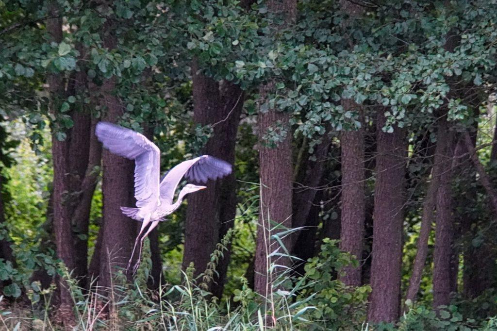 Vogel am Peeneufer