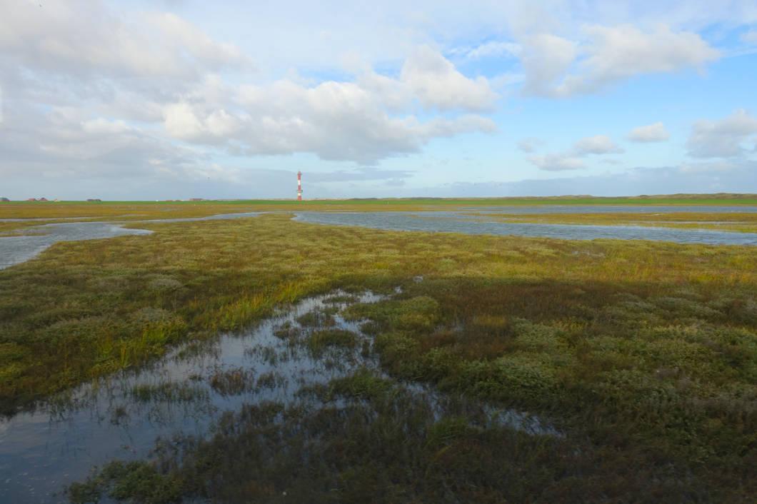 Salzwiesen auf Wangerooge