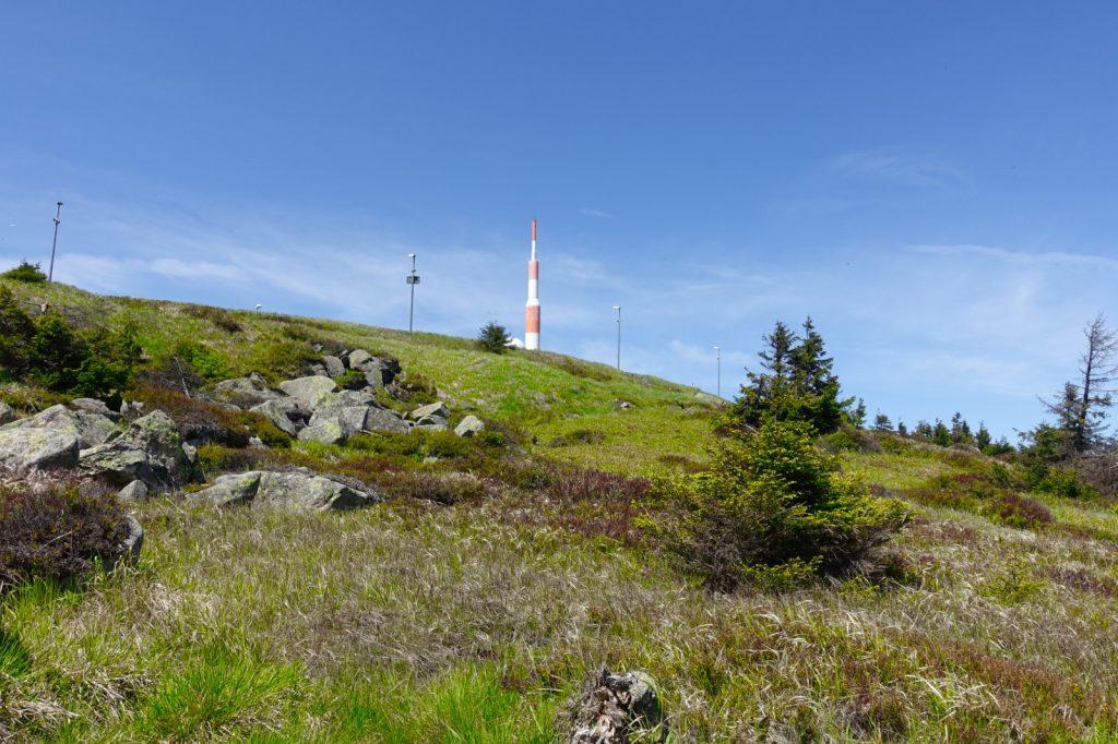 Bewuchs auf dem höchsten Berg im Harz