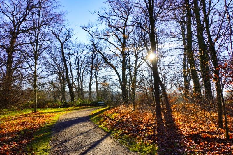 Weg durch den Schlosspark Sacrow