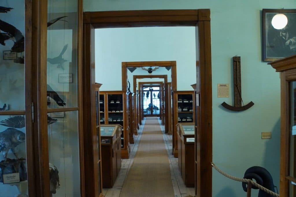 Museum - Naturalienkabinett Waldenburg