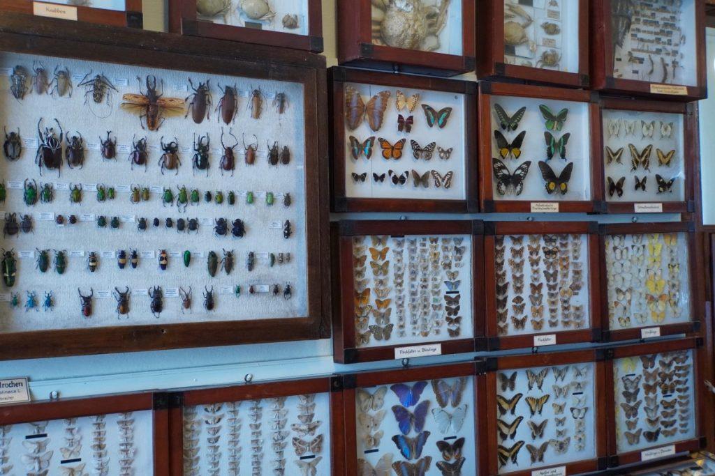 Schaukästen mit Schmetterlingen