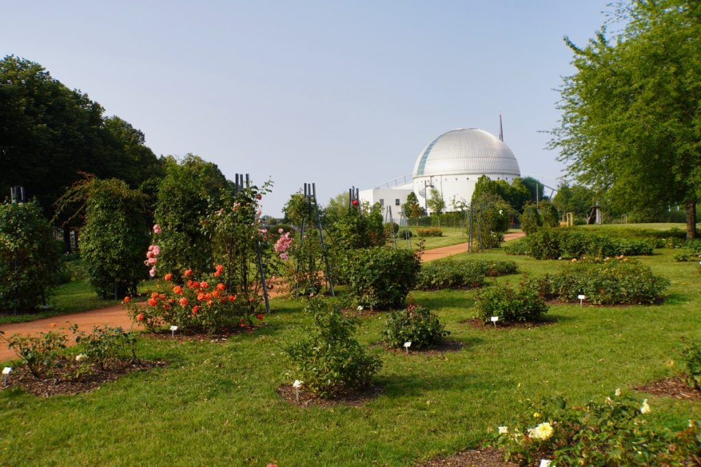 Rosengarten im Elbauenpark