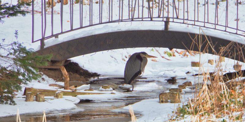 Parkbewohner im Schutz einer Brücke