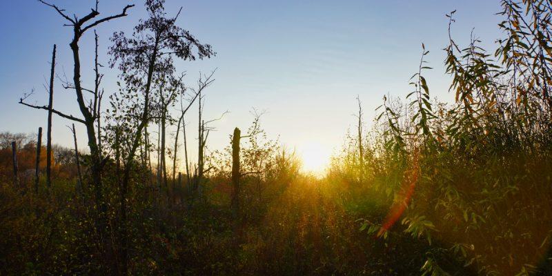Wanderung von Lübars - Sonnenuntergang